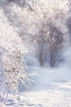 tinkling winter II by Yulia Pletinka, via 500px