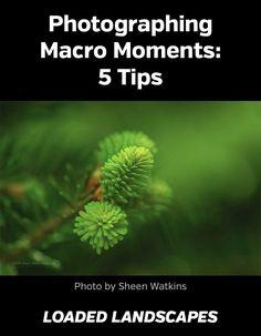 http://loadedlandscapes.com/macro-photography/ #macro #photography
