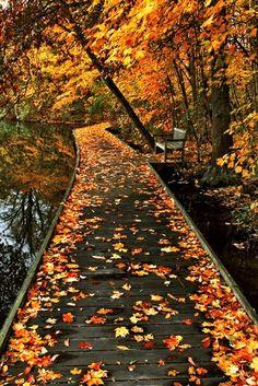 Autumn is the best season. Beautiful World, Beautiful Places, Beautiful Pictures, Autumn Aesthetic, The Great Outdoors, Autumn Leaves, Autumn Nature, Autumn Rain, Autumn Harvest