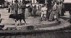 Mastin español, primeros del s. XX en Utrera.