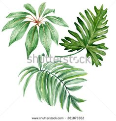 Set of watercolor tropical leaves isolated on white background. Vector illustration