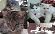 Free the Five Syrian cats sentenced to death... Petition