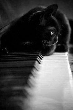 Mi lindo gato es asi........... My beautiful cat is like that........................