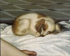 1st image of the papillon dog (detail of the 'venus de urbino' of Titian)