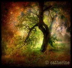 Faerie Glenn - iPhonography by Catherine Howie Best Iphone, Iphone Photography, Faeries, Your Image, Photographers, Digital Art, Waves, World, Artist