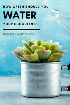 Do you struggle with knowing when to water your succulent? This post will make watering succulents easy! Never over-water or under-water your succulent again! #healthyplants #watersuccsright Succulent Plant Care | Succulent Plant Care Tips | How Often to Water Succulents | Succulents Water | How to Care for Succulents |