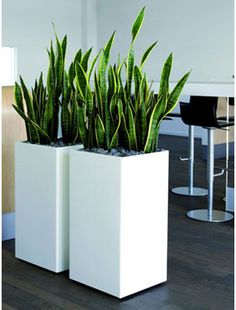 images for tall ceramic pots for plants - Google Search