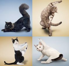 Yoga Cats.. OMG Lauren Parkos Look!!