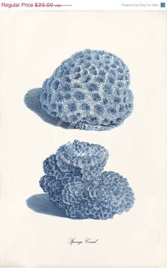 Blue Coral Art Print  11 x 17 Inch  Sponge Coral by 1001treasures, $20.00