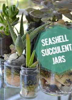 Seashell Succulent Jars-These also are cool and make use of mason jars...which I thoroughly fancy!