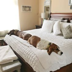 Bed Pillows  Basset Hounds Bookends