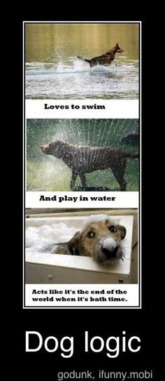 """""""Loves water... to swim in... to play in... BUT NOT BATHS!  Dog Logic."""" ~ Dog Shaming shame Perfect Logic Yup."""