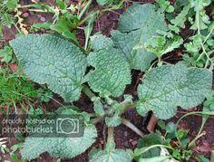 Edible Plants, Herbalism, Plant Leaves, Succulents, Herbs, Vegetables, Gardens, Cooking, Diet