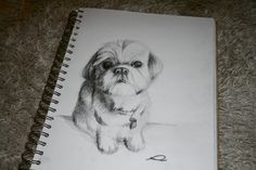 Shih Tzu by =rhynwilliams on deviantART