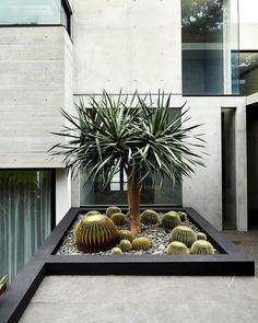 Easy Desert Landscaping Tips That Will Help You Design A Beautiful Yard Tropical Garden Design, Modern Garden, Outdoor Living Design, Cactus House Plants, House Landscape, Garden Layout, Garden Design, Modern Landscaping, Garden Projects