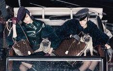 dogs in fashion louis vuitton