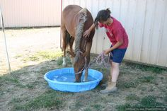 Good way to create a water obstacle if the farm doesn't have a natural water source. Could put some sand in the bottom and bury it, too! Horse Stables, Horse Barns, My Horse, Horse Riding Tips, Horse Tips, Obstacle Course Training, Ranch Riding, Horse Exercises, Natural Horsemanship