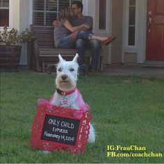 Too cute! If I were having a baby, I would want to do this, if my dog would participate. Pregnancy announcement with dog