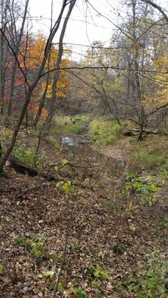 Nerstrand state park, Minnesota