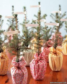 Trees to Go party favors great for a Christmas party. Or for gifts! This would work for other plants as well!! Really like the simplicity and elegance of this idea.