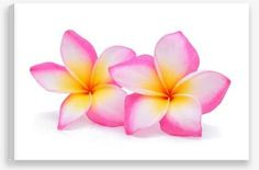 Canvas Wall Art – Pink Frangipani