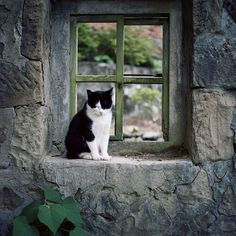 another cat in the window!.