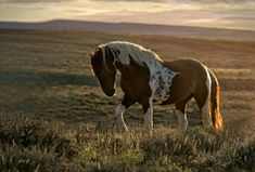 Wild mustang called Tango, in Sand Wash Basin, Colorado. Scary Animals, Animals And Pets, Cute Animals, Most Beautiful Horses, Animals Beautiful, Beautiful Creatures, Wilde Mustangs, Cheval Pie, Types Of Horses