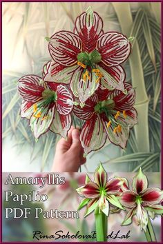 PDF Pattern of gorgeous Amaryllis Papilio)) The PDF will help you to create this one of the most remarkable and beautiful of all Hippeastrum with pretty spectacular butterfly or orchid-like flowers… Seed Bead Flowers, Wire Flowers, Felt Flowers, Beading Projects, Beading Tutorials, Beading Patterns, Bracelet Patterns, Crochet Flower Patterns, Crochet Flowers