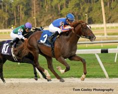 Battle Hardened, winner of the G3 Sam F. Davis Stakes at Tampa Bay Downs (Florida) Feb 4 at 1 1/16 miles in 1:44.58, 81 Beyer speed figure