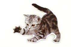 Wandbild Katze