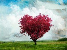 El árbol del amor sí existe!! 8) #makeawish