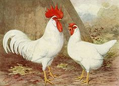 Vintage Rooster and Hen White Leghorn Chicken by TheOldDesignShop
