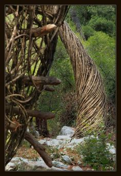 A Year in a French Forest.  2011-2012: Sculpture No 7