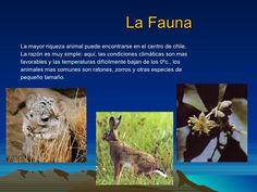 Resultado de imagen para fauna zona central