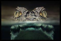 Zwei Augen von Christian Maier (amarok) - f5 | 1/5 Sekunden | ISO 200 | Stack aus 12 Einzelaufnahmen à 150mm