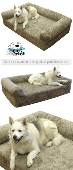 dog bed: Koto on a supreme x-large plush plain bolster bed #dogbed #memory #foam #xldogbed