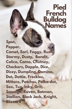 When you are anxiously waiting for your French Bulldog to join you...Spot, Pepper, Comet, Rush, Stormy, Dusty, Merle, Bandit, Calico, Camo, Chutney, Checkers, Dapple, Dice, Dicey, Dumpling, Domino, Dot, Dottie, Freckles, Mittens, Patches, Polka dot, Sox, Tux, Inky, Grit, Smudge, Raven, Batman, Stallion, Black Jack, Blizzard #FrenchBulldog #FrenchBulldogs #FrenchBulldogpuppy #FrenchBulldogpuppies #TheFrenchBulldog #cuteFrenchBulldogs #FrenchBulldogVideos #Frenchies #LilacFrenchBulldogs Pied French Bulldog, French Bulldog Names, French Bulldog Puppies, French Bulldogs, Jack Black, Freckles, Mittens, Smudging, Camo