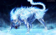 bo trzeba walczyć jak tygrys ....