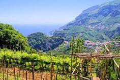 Terre del #vino - #Campania | #Svinando Magazine |