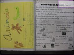 Animal Adaptations Notebook ideas- excellent foldables & pictures!