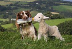 animal friendship020