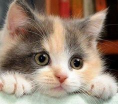 Are you ready to be bowled over by cuteness?