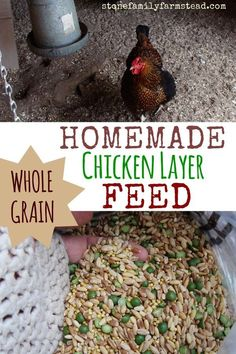 Chicken Coop - Homemade Chicken Layer Feed Building a chicken coop does not have to be tricky nor does it have to set you back a ton of scratch.
