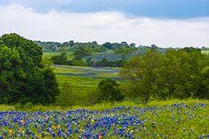 April Bluebonnets ~ Ennis, TX