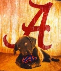 Good Dog Alabama Crimson Tide