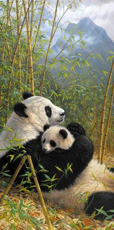 Mom panda and her cub hugging