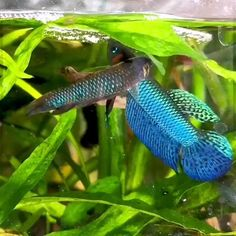 Tropical Freshwater Fish, Tropical Fish Aquarium, Freshwater Aquarium Fish, Aquarium Fish Tank, Kids Aquarium, Tropical Fish Tanks, Beautiful Tropical Fish, Beautiful Fish, Betta Fish Types