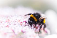 Bumble bee in candyland by nemi1968