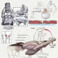 """FitnessHacks101 on Twitter: """"Anatomy of the Dumbbell Pullover https://t.co/fyvvce5yNq http://t.co/QuWAkKD2BC"""""""