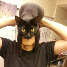 How to be batman using your cat...hahahahah